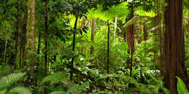 Rainforest Apr Hero