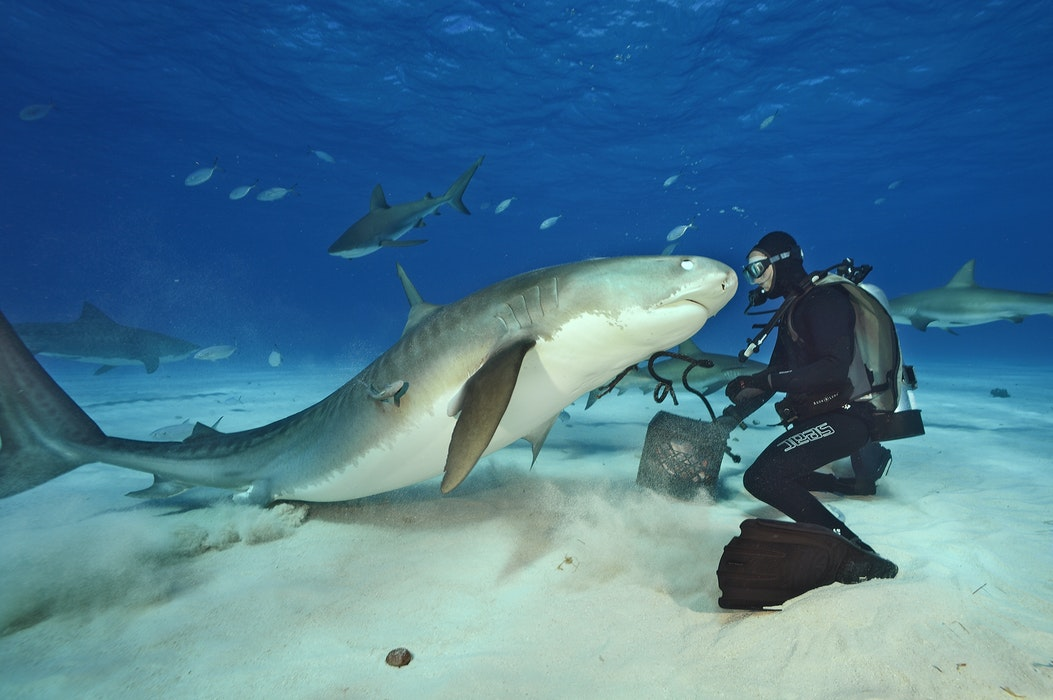 MM8116_131207_00561_CR-Brian-Skerry